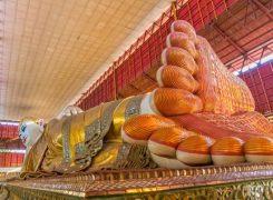 gautama-the-buddha-245×180-1